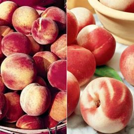 Organic Polar Peach Tree Collection