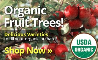 Organic Fruit Trees! Delicious varieties to fill your organic orchard. Shop Now