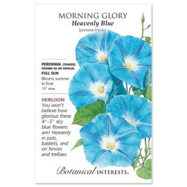 Heavenly Blue Morning Glory Seed