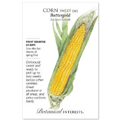 Buttergold Sweet Corn Seed