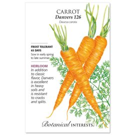 Photo of Danvers 126 Carrot Seed