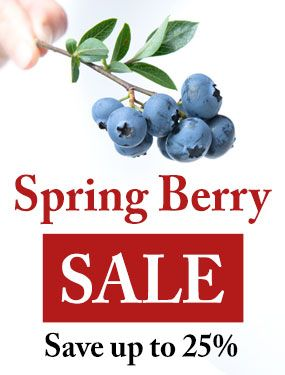 Save up to 25% on selected berry plants!