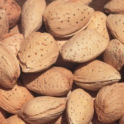 Photo of Hall's Hardy Almond