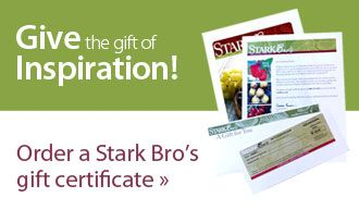 Gift the gift of inspiration! Order a Stark Bro's gift certificate.