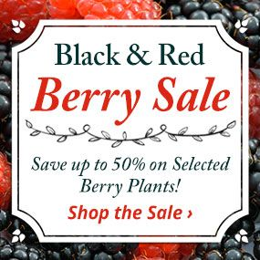 Save up to 50% on selected berry plants.