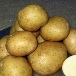 Keuka Gold Seed Potato