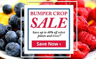 Save up to 40% on select plants and trees!