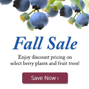 Enjoy discount pricing on select berry plants and fruit trees!