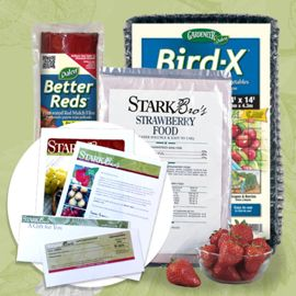 Photo of Strawberry Plant Success Kit Gift Certificate Collection