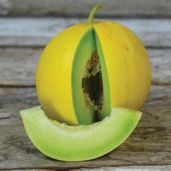 Golden Honeymoon Melon Seed