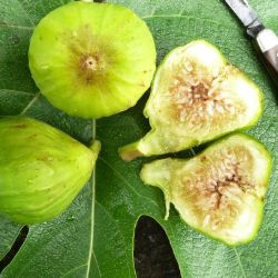 Lattarula Fig