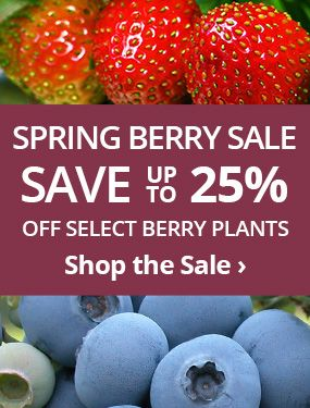 Save up to 25% off select berry plants!
