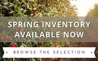 Spring Inventory Now Available