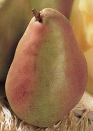 Photo of Duchess Pear
