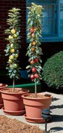 "Stark® Columnar ""Pick Your Own"" Assortment Any 2"