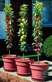 "Stark® Columnar ""Pick Your Own"" Assortment Any 3"