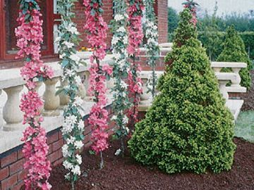 "Stark® Columnar ""Pick Your Own"" Assortment Any 5"