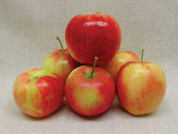 Prairie Spy Apple
