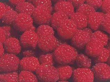 Dinkum Red Raspberry