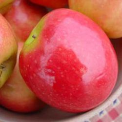 Pink Lady® Apple