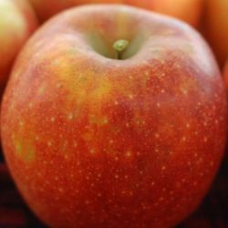 Photo of Wolf River Apple