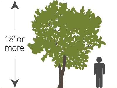 standard bare-root tree size