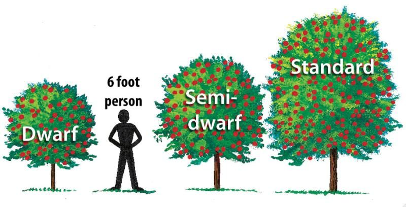 Approximate Tree Sizes