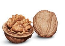 Lake English Walnut